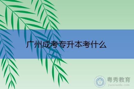 广州成考专升本考什么科目内容?