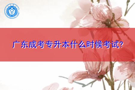 广东成考专升本什么时候考试,考取的学历有哪些用途?